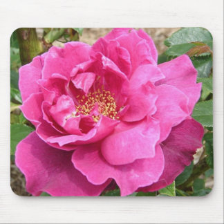 FLORAS FEAST PINK ROSE MOUSE PAD