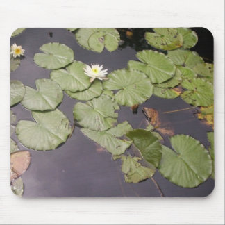 FLORAS FEAST WATERLILY'S MOUSE PAD