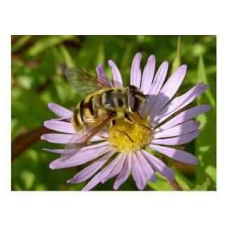 Florea de Hoverfly - de Myathropa Postal