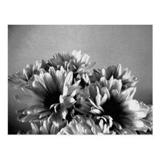 Floreal Black and White Postcard