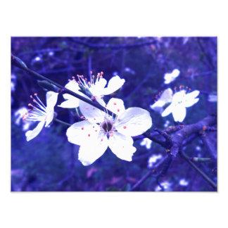 """""""Florece"""" la impresión de encargo 14 x 11 por el m Arte Fotografico"""
