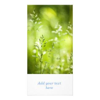 Florecimiento de la hierba verde de junio tarjeta fotográfica personalizada
