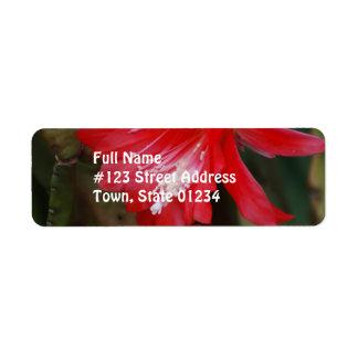 Florecimiento rojo del cactus etiquetas de remite