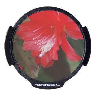 Florecimiento rojo del cactus sticker LED para ventana