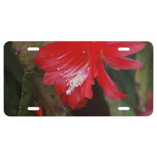 Florecimiento rojo del cactus placa de matrícula
