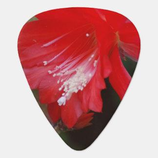 Florecimiento rojo del cactus uñeta de guitarra