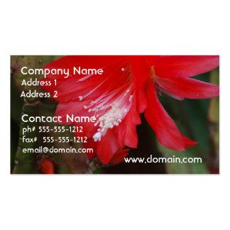 Florecimiento rojo del cactus tarjetas de visita