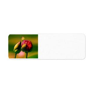 Florecimiento subió etiqueta de remite