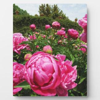 Florence. Italy  Rose Garden Plaque