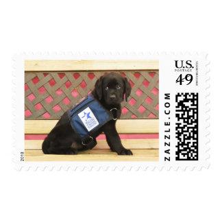 Florence stamp
