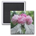 Florero del imán cuadrado de los Peonies rosados
