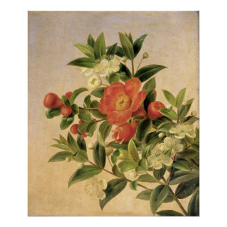 Flores, 1835 póster