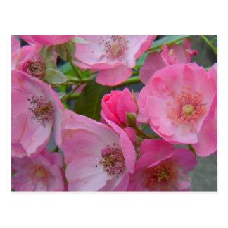 Flores 1 tarjeta postal