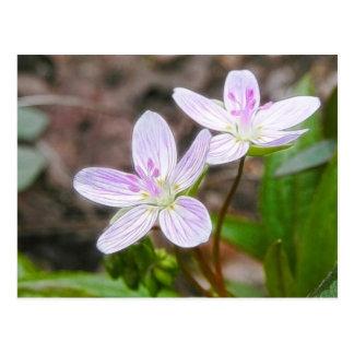 Flores agraciadas de la belleza de primavera tarjetas postales