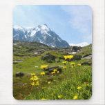 ¡Flores alpinas - hermosas! Alfombrillas De Ratón