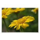 Flores amarillas arte fotográfico