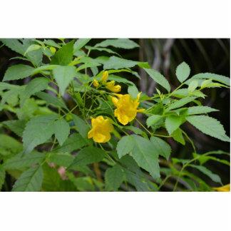 flores amarillas contra las hojas verdes esculturas fotográficas