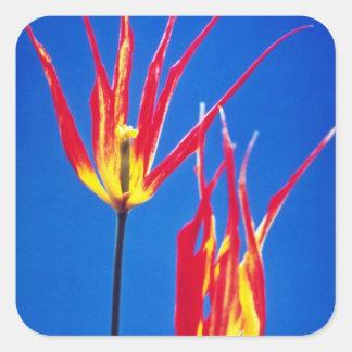 flores amarillas de Acuminata del Tulipa de la esp Pegatinas Cuadradases Personalizadas