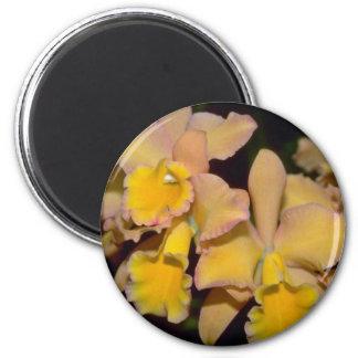 flores amarillas de Cattleya Iman De Nevera