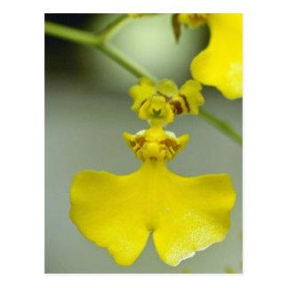 flores amarillas de Flexuosum (Oncidium) Tarjeta Postal