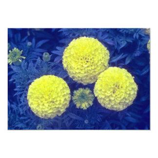"""flores amarillas de la maravilla africana (Tagetes Invitación 5"""" X 7"""""""