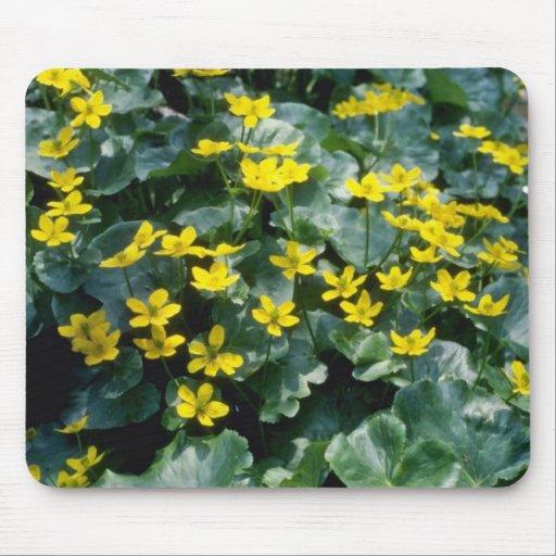 flores amarillas de la maravilla de pantano (Calth Tapetes De Ratón