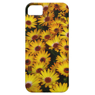 Flores amarillas de la margarita en primavera iPhone 5 protectores