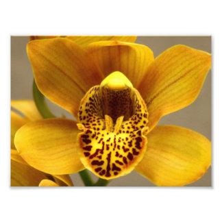 Flores amarillas de la orquídea fotografia