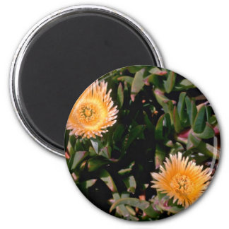 Flores amarillas de la planta de hielo imán de frigorífico