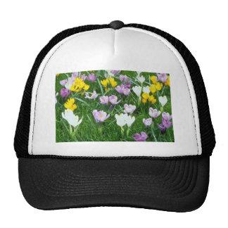 Flores amarillas de las azafranes gorras de camionero
