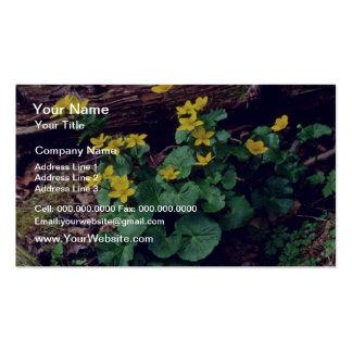 flores amarillas de las maravillas de pantano tarjeta de visita