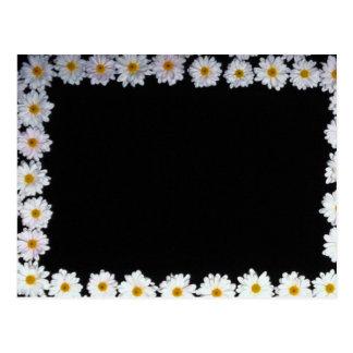 flores amarillas de las margaritas postal