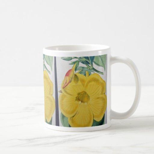 flores amarillas de los nobilis del Allamanda Taza Clásica