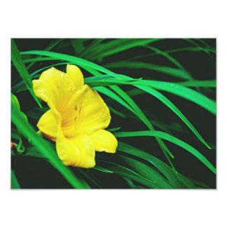 Flores amarillas de Michigan Fotografías