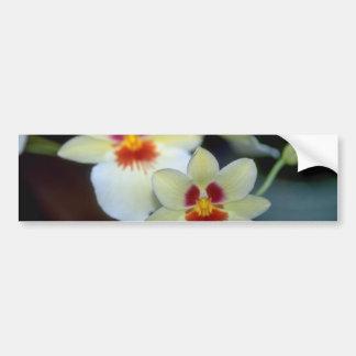 Flores amarillas de Miltoniopsis Etiqueta De Parachoque