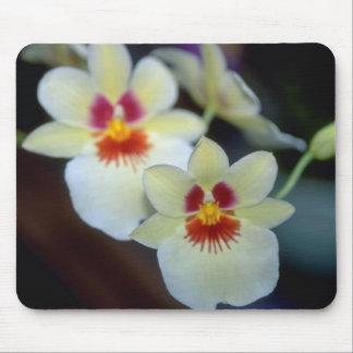 Flores amarillas de Miltoniopsis Alfombrillas De Raton