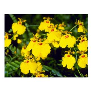 flores amarillas de Oncidium Tarjeta Postal