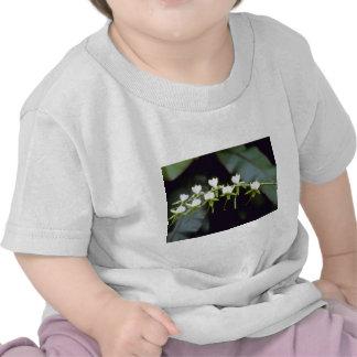 Flores amarillas de Rothschildiana (Vanda) Camiseta