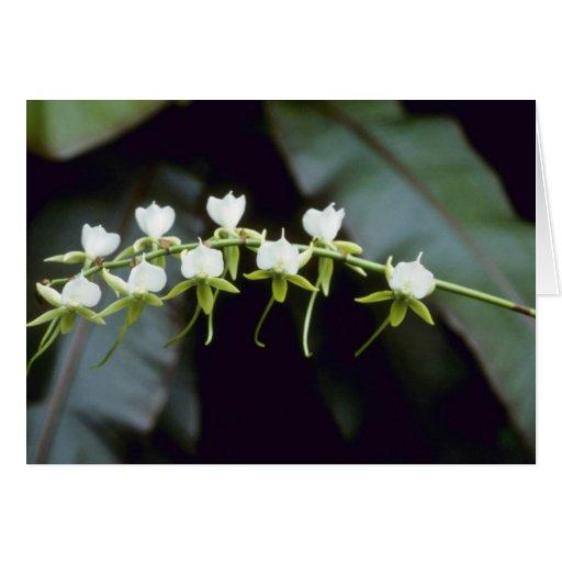 Flores amarillas de Rothschildiana (Vanda) Tarjeta