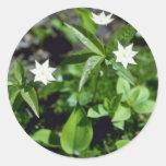Flores amarillas de Starflower (Trientalis Pegatina Redonda