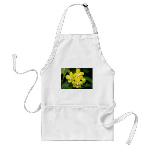flores amarillas de Vanda Delantal