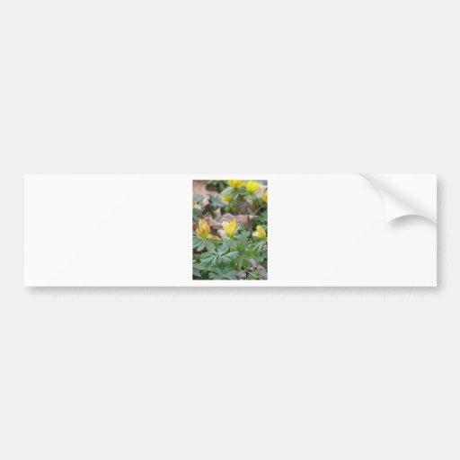 Flores amarillas del arbolado de la primavera pegatina para auto