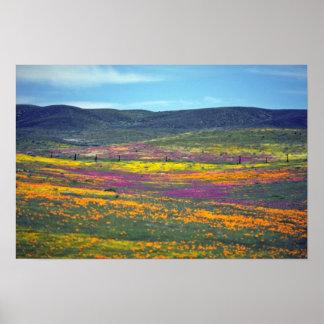Flores amarillas del campo del Wildflower Póster