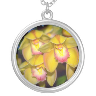 flores amarillas del Cymbidium Grimpola