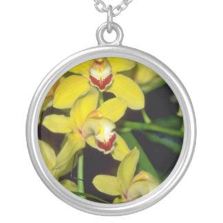 flores amarillas del Cymbidium Collares