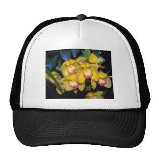 flores amarillas del Cymbidium Gorros Bordados