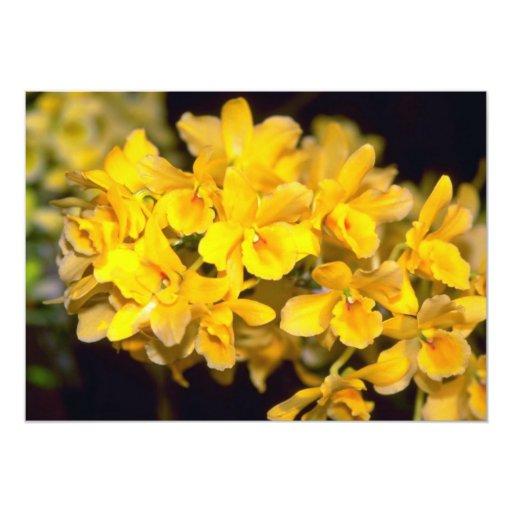 flores amarillas del Dendrobium Invitación 12,7 X 17,8 Cm
