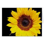 Flores amarillas del girasol felicitación
