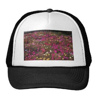 flores amarillas del musgo color de rosa (Portulac Gorro De Camionero