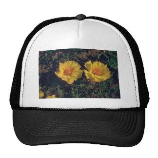 flores amarillas del musgo color de rosa (Portulac Gorros Bordados